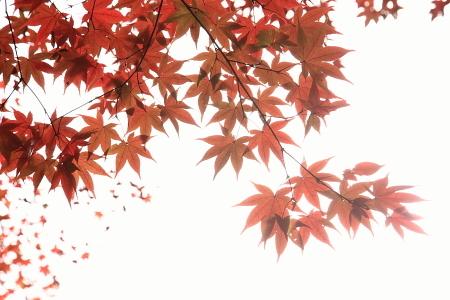 0911_kyoto_114