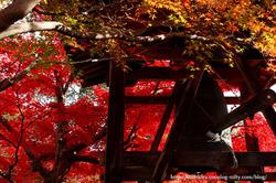 1011_kyoto_071
